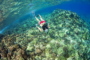 Young woman in red bikini snorkels over coral reef, Molokini, Hawaii, United States of America