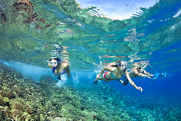 Three young people free diving over a Hawaiian reef, Hawaii, United States of America