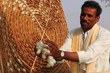 Silk farmer with cocoons, Kanakpura, Karnataka, India, Asia