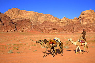 Bedouin and camels, Wadi Rum, Jordan, Middle East