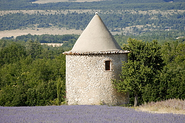 Lavender field and stone tower, Provence, Southern France / (Lavendula angustifolia)