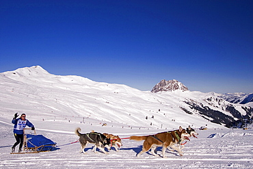 Sledge dog race at Wildkogel, Neukirchen, Pinzgau, Salzburger Land, Austria / Wildkogel Longtrail, Siberian Husky, Huskies