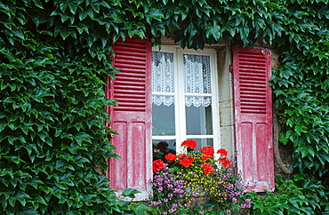 Housefront with Boston Ivy and window with flowers, Burgundy, France