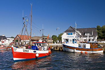 Fishing boats in harbour, Vitte, Isle of Hiddensee, Mecklenburg-Western Pommerania, Germany