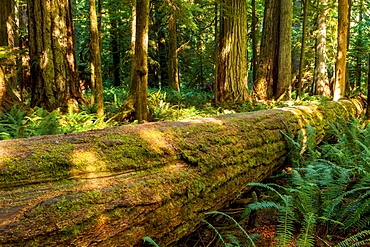Cathedral Grove, Vancouver Island, British Columbia, Canada