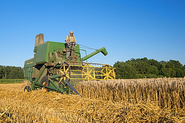 Corn harvest, with combine harvester, John Deere from 1969, Lower Saxony, Germany
