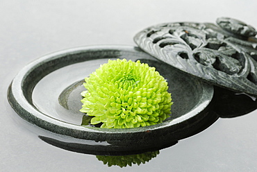 chrysanthemum blossom in bowl with water