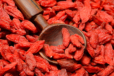 Goji berries / (Lycium barbarum) / wooden spoon
