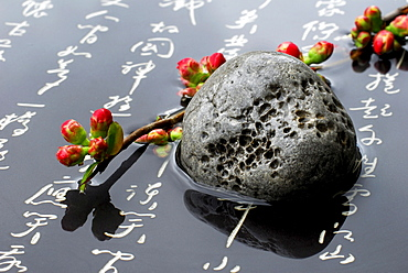 Ornamental Quince, stone and japanese chracters / (Chaenomeles japonica)