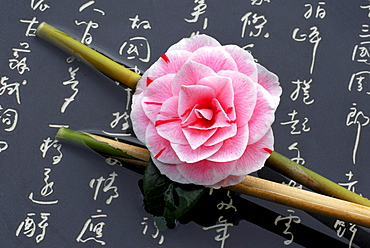 Camellia 'Prof. Filippo Parlatore' on bamboo cane and japanese characters / (Camellia japonica)