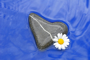 Heart-shaped stone with Daisy blossom
