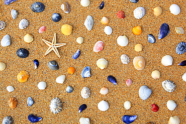 Starfish and shells in sand