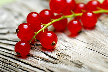 Red Currant Berries / (Ribes rubrum)