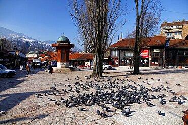 Pigeons at Sebilj Fountain, Sarajevo, Bosnia, Bosnia and Herzegovina, Europe
