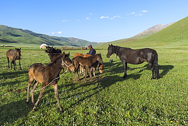 Kyrgyz breeder with his horses, Song Kol Lake, Naryn province, Kyrgyzstan, Central Asia, Asia