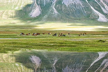 Horses in front of a mountain reflecting in water, Naryn Gorge, Naryn Region, Kyrgyzstan, Central Asia, Asia