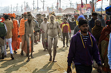 Sadhus walking between pilgrims, Allahabad Kumbh Mela, World's largest religious gathering, Allahabad, Uttar Pradesh, India, Asia