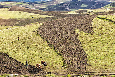 Farmer working his field, Simien Mountains National Park, UNESCO World Heritage Site, Amhara region, Ethiopia, Africa