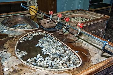 Extraction of silk filaments from cocoons in an alkaline bath, Cappadocia, Anatolia, Turkey, Asia Minor, Eurasia