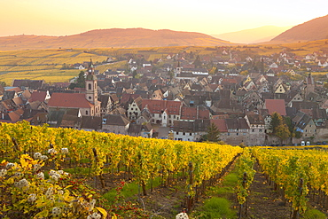 Overview of Riquewihr and vineyards at sunset in autumn, Riquewihr, Alsace, France, Europe