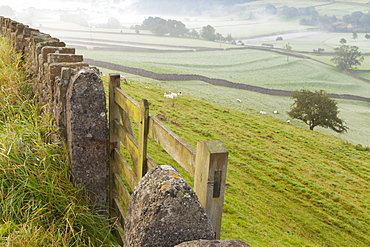 Gate in stone wall and field, near Burnsall, Yorkshire Dales National Park, Yorkshire, England, United Kingdom, Europe