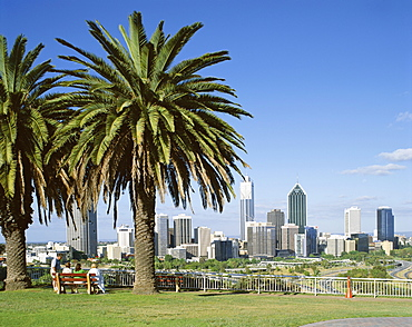 Palm trees and city skyline, Perth, Western Australia, Australia, Pacific