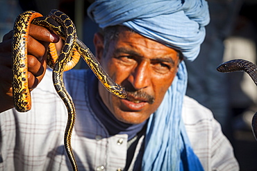 Snake charmer, Djemaa el-Fna Square, The Medina, Marrakesh, Morocco, North Africa, Africa