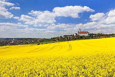 Rape field and Benedictine Abbey, Neresheim, Swabian Alb, Baden Wurttemberg, Germany, Europe
