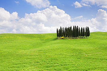 Landscape with cypress trees near San Quirico, Val d'Orcia, UNESCO World Heritage Site, Tuscany, Italy, Europe