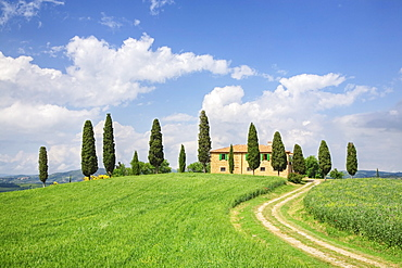 Farm house with cypress tree, Pienza, Val d'Orcia, UNESCO World Heritage Site, Tuscany, Italy, Europe
