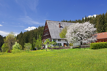 Black Forest house in Urachtal Valley in spring, Black Forest, Baden Wurttemberg, Germany, Europe