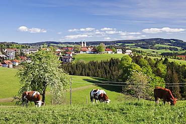 St. Maergen, spring, Glottertal Valley, Black Forest, Baden Wurttemberg, Germany, Europe