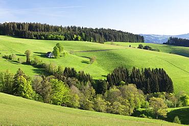 Glottertal Valley, Black Forest, Baden Wurttemberg, Germany, Europe