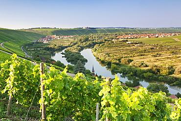 Vine village Escherndorf and Vogelsburg Castle, Volkacher Mainschleife Loop, Main River, Mainfranken, Lower Franconia, Bavaria, Germany, Europe