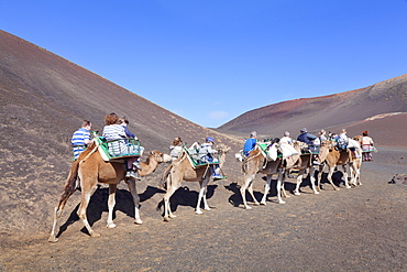 Tourists on camel tour, dromedaries, Parque National de Timanfaya, Lanzarote, Canary Islands, Spain, Europe