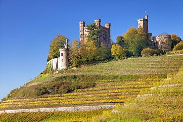 Ortenberg Castle and vineyards in autumn, Offenburg, Black Forest, Baden-Wurttemberg, Germany, Europe