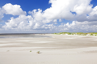 Dunes at a beach, Sankt Peter Ording, Eiderstedt Peninsula, Schleswig Holstein, Germany, Europe