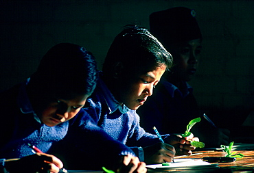 Schoolboys at work during a Biology lesson at a school in Kathmandu, Nepal