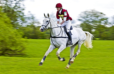 Young man rides a grey mare horse cross-country in an eventing competition, United Kingdom