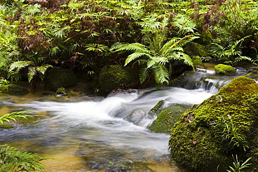 Windmill Creek at World Heritage Mount Lewis State Forest, Queensland, Australia
