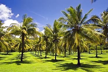 Palm trees in the Thala Beach area of Port Douglas, Australia