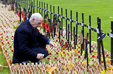 VETERAN AT ST MARGARET'S CHURCH, WESTMINSTER INSPECTS CROSSES IN THE ROYAL BRITISH LEGION FIELD OF REMEMBRANCE