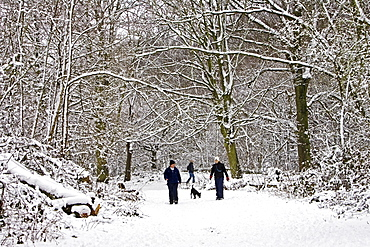 Couple on a winter's day walk the dog across snow-covered Hampstead Heath, North London, United Kingdom