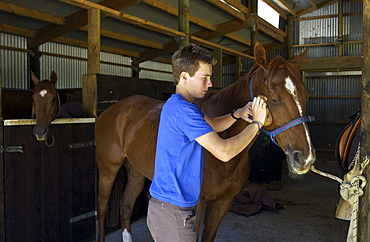 Young man grooms a horse in New Zealand