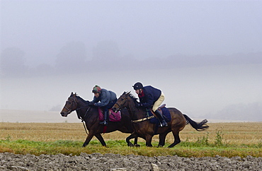 Jockeys riding racehorses on gallops in the Cotswolds, Swinbrook, Oxfordshire, UK