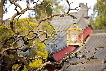 Laughing Thrush in cage hanging on a branch in the Monk's Garden at The Big Wild Goose Pagoda, Xian, China