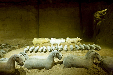 Terracotta animal figures, including piglets and sheep, at the Han Dynasty Tomb of Han Yang Ling, Xian, China