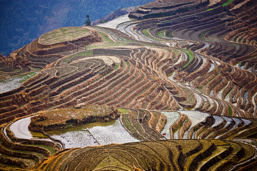 Flooded Long Ji rice terraces at Longsheng, near Guilin, China