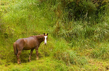 Chestnut horse in landscape, North Island, New Zealand