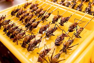 Deep fried grasshoppers for sale in the Night Market, Wangfujing Street, Beijing, China